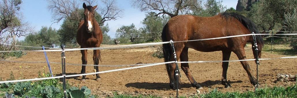 Horse Riding near Malaga | Alora | Horse Riding | Holiday